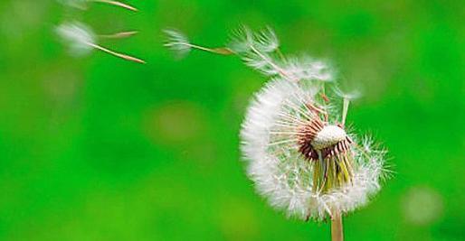 Todavía no ha empezado la primavera pero las personas con alergia ya lo están pasando mal.