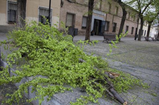 En la imagen se aprecia la rama caída, muy cercana al centro escolar.