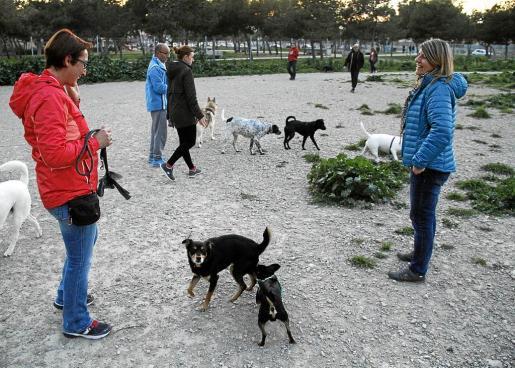 Vecinos de El Vivero con sus perros, en Pedro Poveda, lleno de procesionaria y suelo de escombros