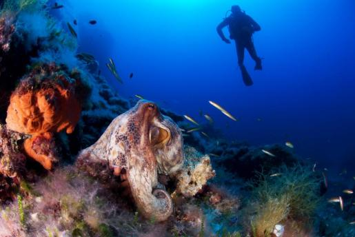 Investigadores recorriendo el Mediterráneo.