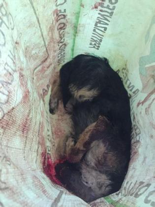 Imagen de la perrita que fue localizada muerta en el interior de un saco.