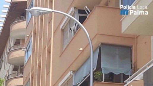 La policía ha difundido esta imagen del perro atrapado en la cornisa de un segundo piso.