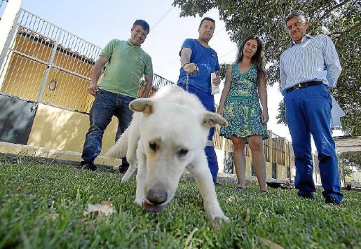El pasado año entraron 1.750 perros en Son Reus. De estos, 1.024 fueron dados en adopción.