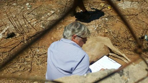 Los técnicos de Medi Ambient no apreciaron irregularidades, a pesar de que hallaron una oveja muerta en el terreno.