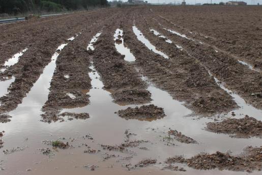 Imagen de un campo de cultivo completamente inundado.
