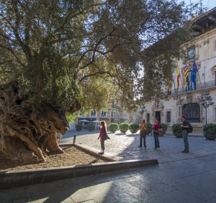Comportamientos incívicos hacían peligrar la integridad del árbol centenario.