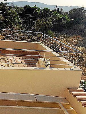 El perro, en la terraza.