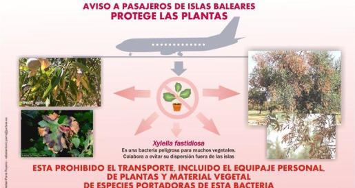 En el aeropuerto de Badajoz han instalado carteles advirtiendo de la prohibición de transportar de vegetales.