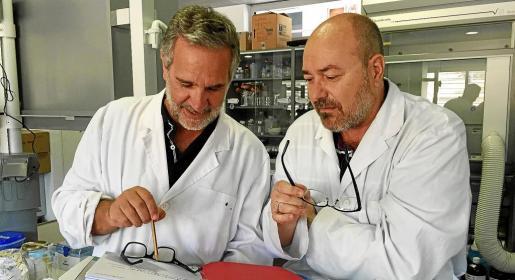 Los profesores de la UIB Xavier Busquets y Pablo Escribá lideran el equipo científico que investiga los efectos anticancerígenos del Minerval.