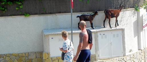 Los turistas aprovechan para tomar fotografías con sus hijos cerca de los animales.