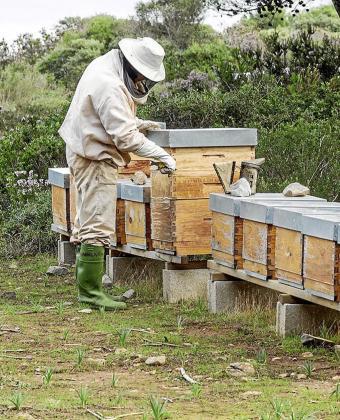 Imagen de un apicultor frente a todo un seguido de cajas de enjambre.