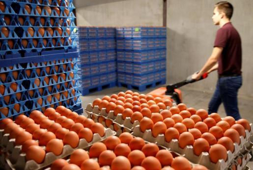 El escándalo de los huevos contaminados afecta a 16 países europeos.