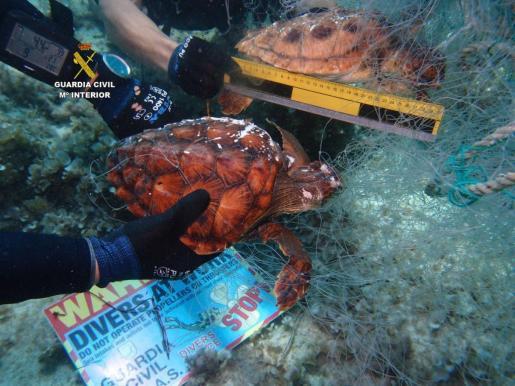 Imagen de la Guardia Civil de las tortugas encontradas muertas en la red de deriva.