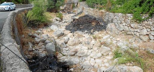 Imagen tomada este lunes en un tramo del Torrent de Fornalutx, donde se cortó una gran cantidad de estas plantas.