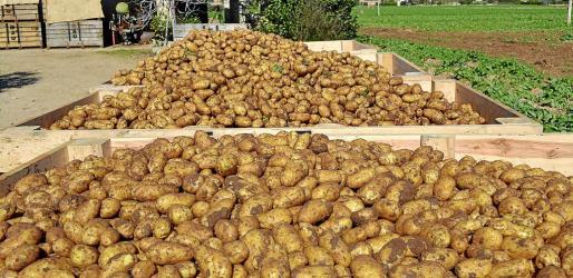 Los exportadores de patatas están considerados como grandres productores de residuos, la mayoría orgánicos.