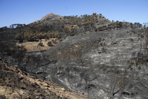 El incendio afectó a 2.335 hectáreas en el verano de 2013.