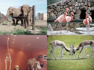 Safari Zoo:  conocer y disfrutar la biodiversidad