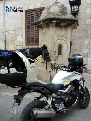 El caballo estaba atado a una garita del Palau de l'Almudaina.