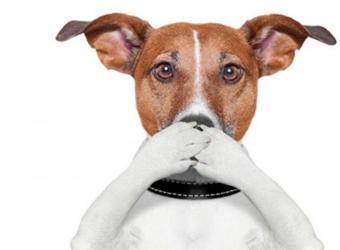 A mi perro le huele mal la boca. ¿Eso quiere decir que tiene una enfermedad?