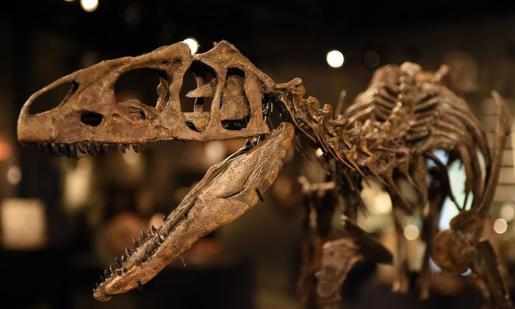 Los expertos han encontrado una correlación casi absoluta entre los cambios de hábitos de los primeros mamíferos y la desaparición de los dinosaurios.