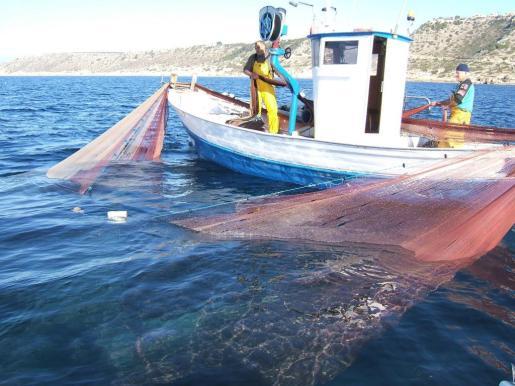 La pesca de jonquillo es una de las principales fuentes de ingresos de los pescadores de Alcúdia.