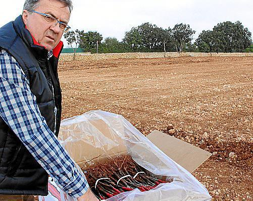 Pepe López del Olmo muestra las plantas que ya han comenzado a plantarse en tierra y se vendimiarán dentro de tres años.