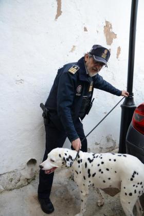 El máximo responsable de la Policía Local de Andratx, José María Molina, logró capturar al animal fugado. Tras realizar las pertinentes gestiones los agentes lograron localizar al legítimo propietario del perro y entregárselo.