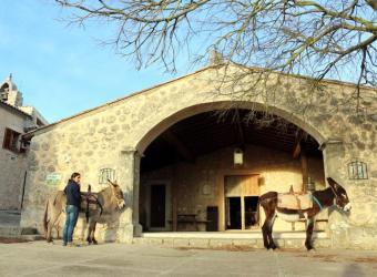 Refugio del Castell d'Alaró