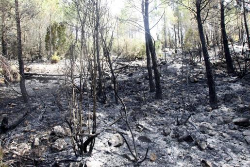 El incendio que ha arrasado miles de hectáreas en Eivissa podría ser controlado hoy.