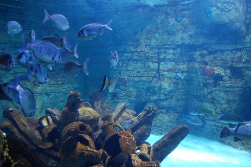 Yacimientos arqueológicos hundidos y los acuarios con peces autóctonos atraen a niños y adultos.