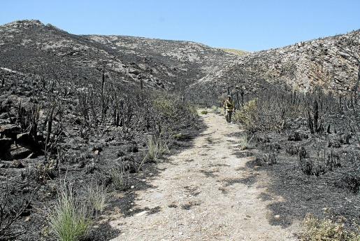 La zona de sa Duaia quedó muy maltrecha tras los diferentes incendios que se han producido.