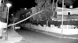 Caída de un gran árbol en la calle Miguela, en es Coll d'en Rabassa, de madrugada. Foto: DANI