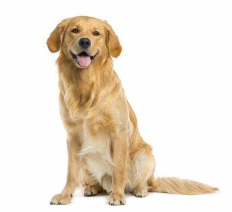 ¿Cómo es el ciclo estral de la perra?