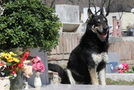 El fiel perro 'Capitán' era un personaje conocido en el cementerio de la localidad, donde permaneció durante años al lado de la tumba de su amo.