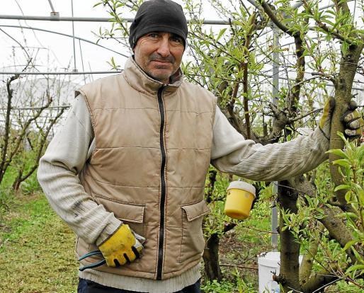 Menorca Alaior Gemma Andreu barranco Son Magna / Llorenç Caules / cultivo arboles frutales Menorca Alaior Gemma Andreu barranco Son Magna / Llorenç Caules / cultivo arboles frutales