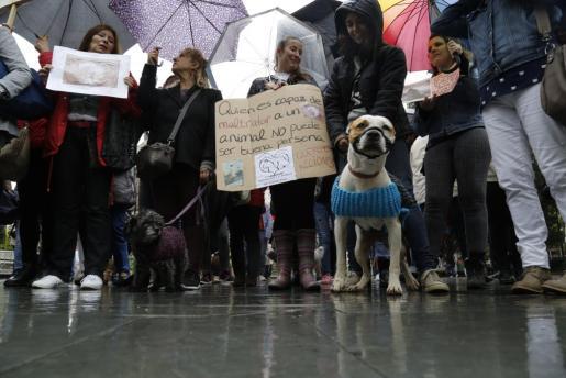 Los animalistas se fijan en la gran divergencia de criterios que cohabitan en el ordenamiento jurídico español con respecto al bienestar y a los derechos de los animales.