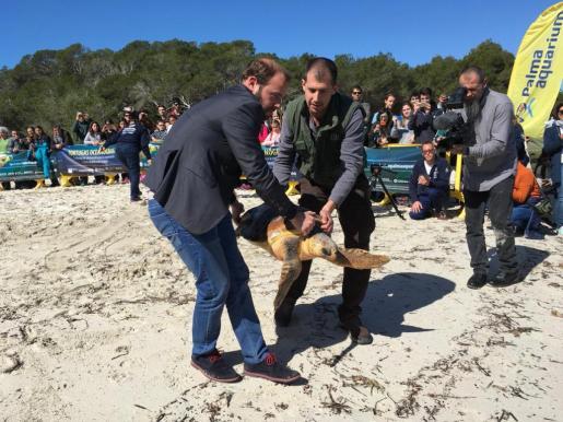 Lasi y Sud son dos tortugas marinas que han sido liberadas este lunes en Santanyí.