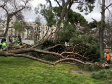 Muere un niño de 4 años tras caerle un árbol encima en el parque del Retiro