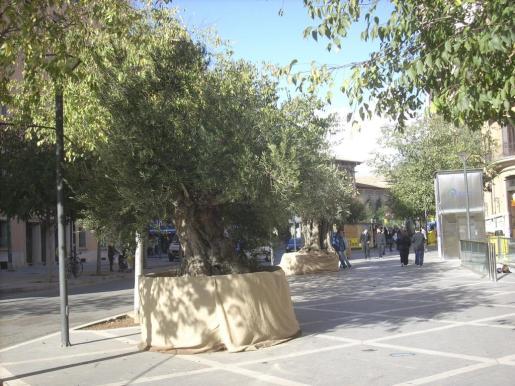 Cort retrasa el cambio de nombre de varias calles de Palma.