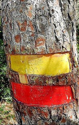 Muestras de las pintadas incrustadas en los pinos de Sant Elm.