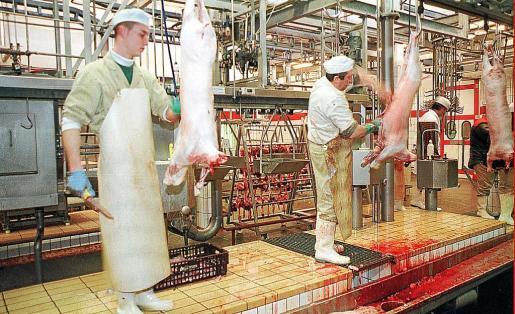 Trabajadores en el matadero de Palma, que puede vivir su último año de existencia.