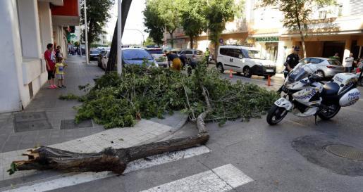 Momento en el que los bomberos retiran el árbol caído.