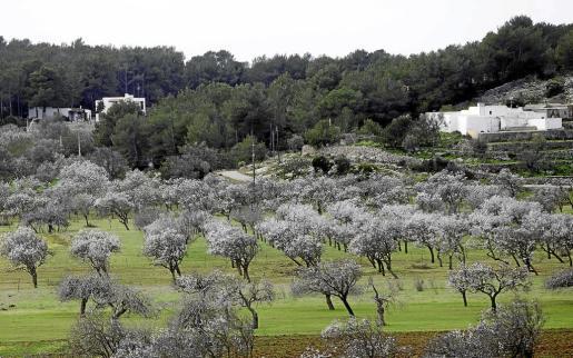 La isla de Eivissa cuenta con 20.500 plazas legales de viviendas turísticas, todas ellas situadas en suelo rústico.