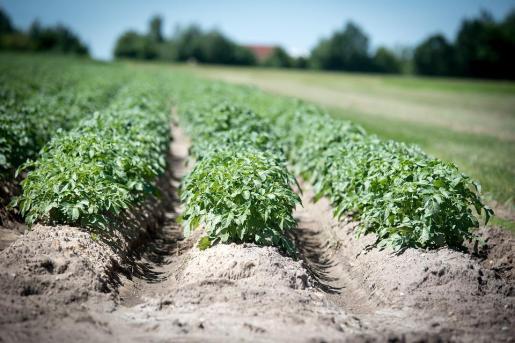 Un caso de película se desencadenó cuando un granjero ruso halló un cráneo humano en sus tierras mientras sembraba patatas.