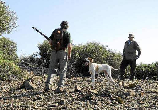En lugar de cuatro, los cazadores podrán capturar un máximo de tres tórtolas al día.