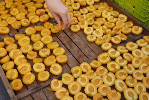 La plaza de Porreres se llenó de personas que querían comprar y degustar albaricoques y sus derivados.