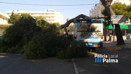La rama ha caído sobre el techo de un autobús de la EMT.