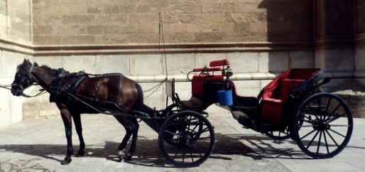 Imagen de una galera frente a la catedral de Palma.