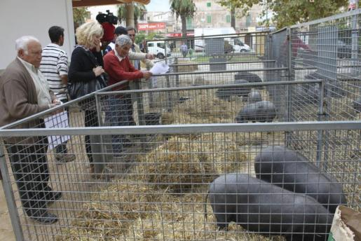 Este año han participado menos corrales en la subasta del cerdo negro mallorquín.