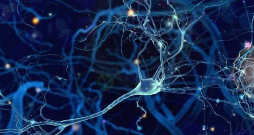 Los responsables del estudio aún no entienden lo que estas células podrían estar haciendo en el cerebro humano.